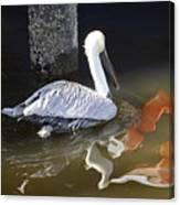 Pelican Swim Canvas Print