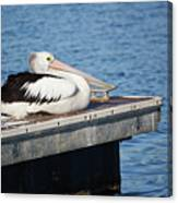 Pelican Taking Time Out 691 Canvas Print