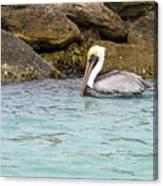 Pelican Trolling Canvas Print