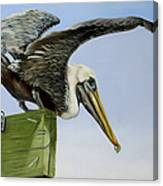 Pelican Wings Canvas Print