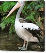 Pelican With A Bird Park In Bali Canvas Print