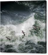 Pelicans And Surf Canvas Print