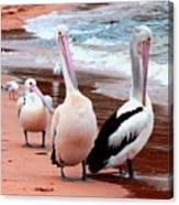 Pelicans At Pearl Beach 5.2 Canvas Print