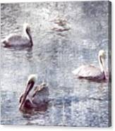 Pelicans At Rest Canvas Print