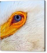Pelican's Eye Canvas Print