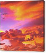 Pelicans Flying Into Sunset  Canvas Print