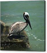 Pelican's Perch Canvas Print