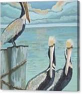 Pelicans Three Canvas Print