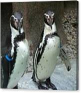 Penguin Duo Canvas Print