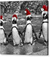 Penguins With Santa Claus Caps Canvas Print