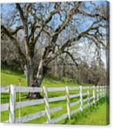 Penn Valley Tree Canvas Print