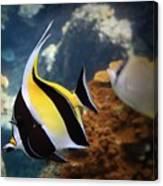 Pennant Coralfish Canvas Print