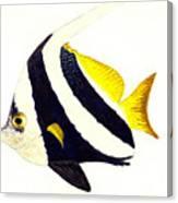 Pennant Fish Canvas Print
