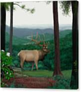 Pennsylvanian Elk Canvas Print