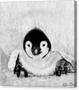 Penquin Chick Canvas Print