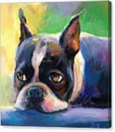 Pensive Boston Terrier Dog Painting Canvas Print