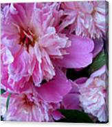 Peonies Under The Weather Canvas Print