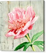Peony At The Fence Canvas Print
