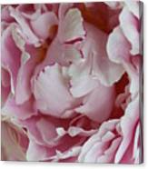 Peony Close Up Canvas Print