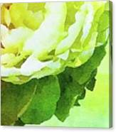Peony In Bloom Canvas Print