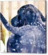 Pepper And The Snow Storm Canvas Print