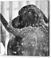 Pepper At Snow Canvas Print