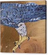 Peragrine Falcon Canvas Print