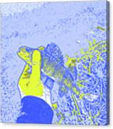 Perch Blue Yellow Canvas Print