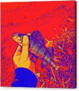 Perch Red Yellow Blue Canvas Print