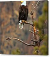 Perched At Smith Rock Canvas Print