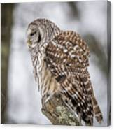 Perched Barred Owl Canvas Print