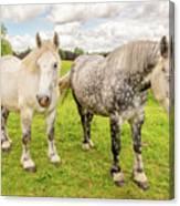 Percherons Horses Canvas Print