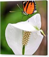 Perching Butterfly Canvas Print