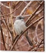 Perching On A Winter's Day  Canvas Print