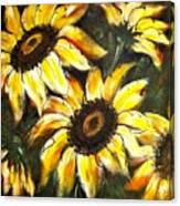 Perfect Beauty Sunflower Canvas Print