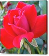 Perfect Form - Knock Out Rose Canvas Print