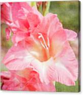 Perfect Pink Canna Lily Canvas Print