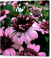Perfect Pink Canvas Print