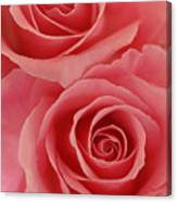 Perfect Pink Roses Canvas Print