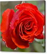 Perfect Red Rose Canvas Print