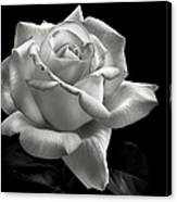 Perfect Rose In Black And White Canvas Print