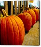 Perfect Row Of Pumpkins Canvas Print