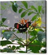 Perfect Set - Butterfly Canvas Print
