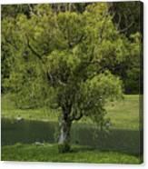 Perfect Tree Swing Canvas Print