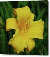 Perfect Yellow Daylily Flowering In A Garden Canvas Print