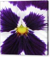 Perfectly Pansy 01 Canvas Print
