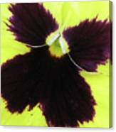 Perfectly Pansy 05 Canvas Print