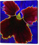 Perfectly Pansy 05 - Photopower Canvas Print