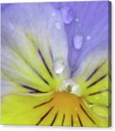 Perfectly Pansy 16 Canvas Print