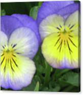 Perfectly Pansy 19 Canvas Print